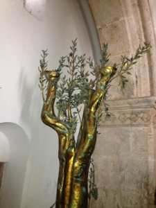 Upper Room olive tree with Notzrim - shoots